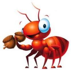 درسهای بزرگی که میتوان از مورچه ها آموخت