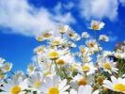 امروز بهار است، ولی من نمیتوانم آنرا ببینم  !!!